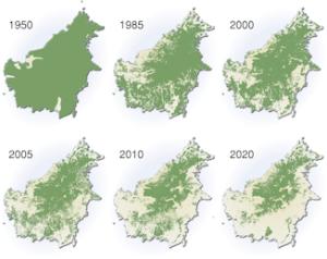 borneo-deforestation-map